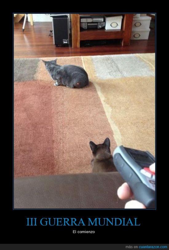 atacar,gato,laser,troll