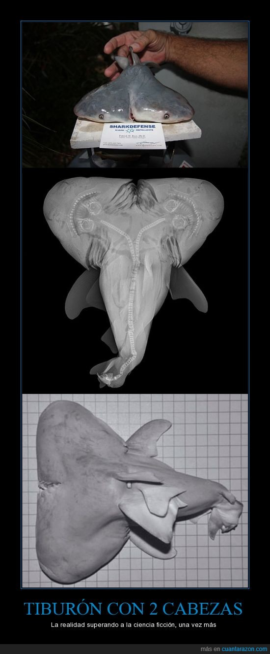 cabezas,ciencia,con,dos,ficcion,mutacion,realidad,superando,tiburon