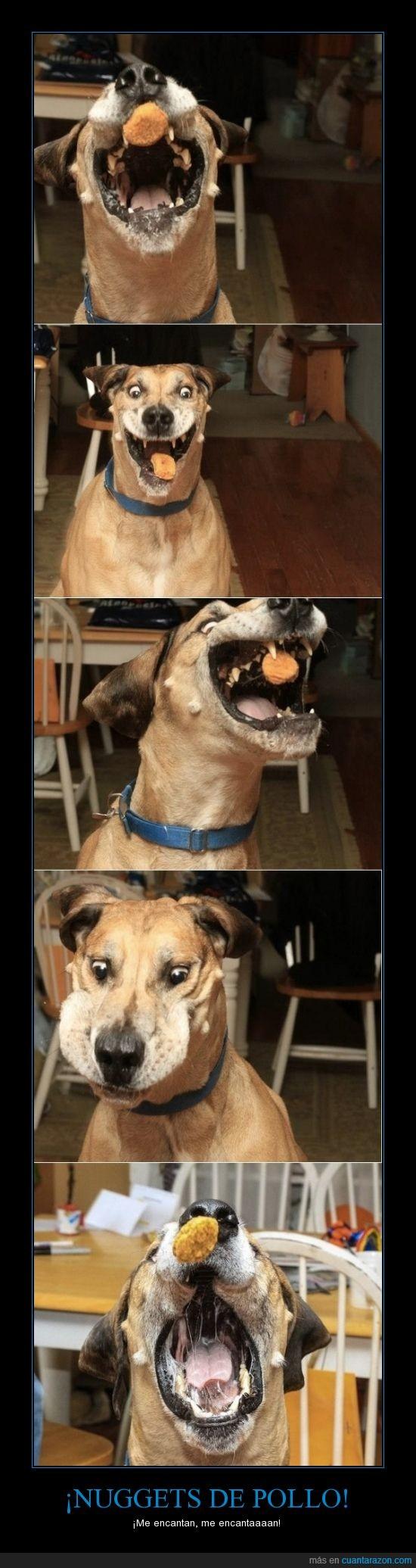 hambre,loco,perro,pollo