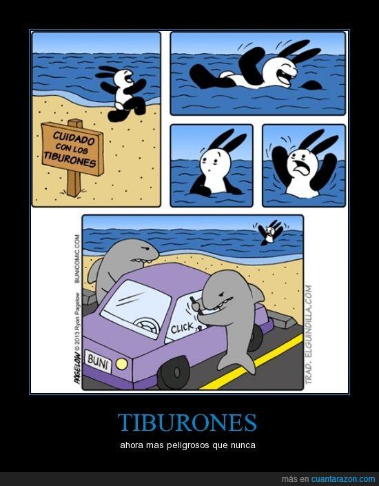 coche,cuidado,nadar,robar,tiburones