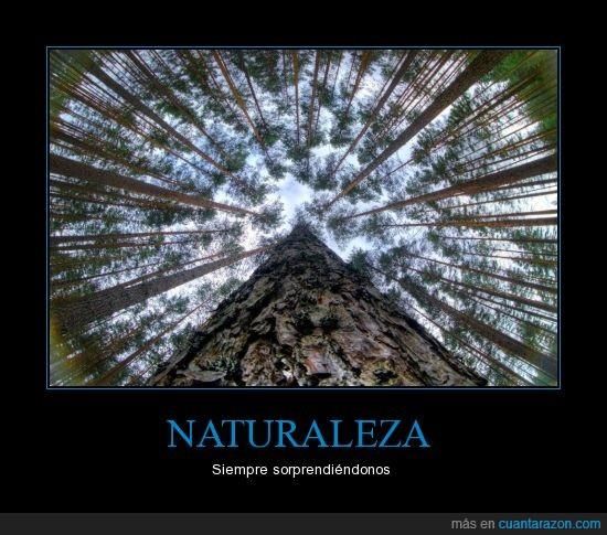 arbol,fuga,naturaleza