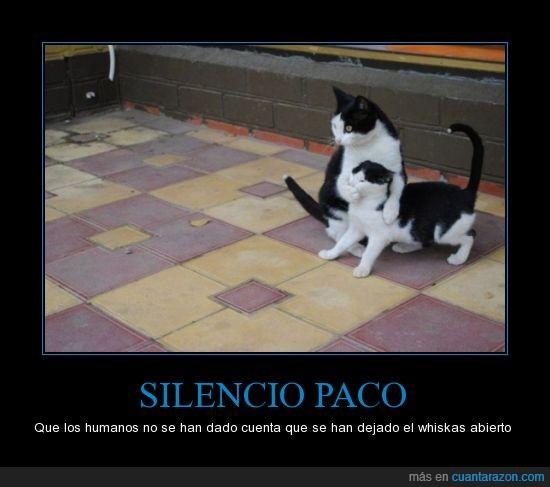calla tonto,gatos,oportunista,paco :),whiskas gratis