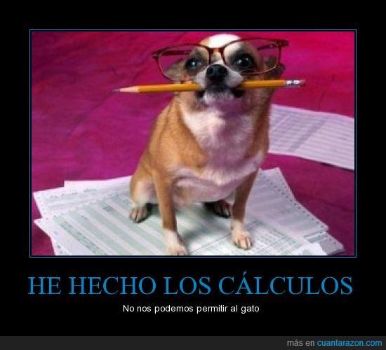 calculos,gato,mantener,matematicas,perro