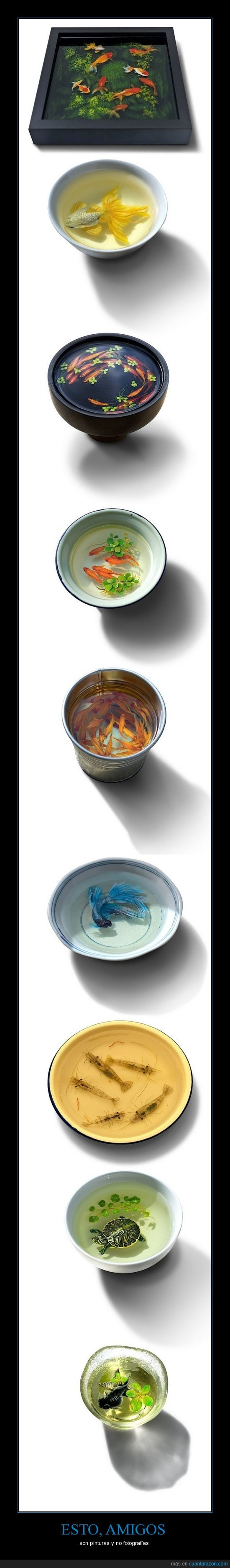 3D,fotografia,hiperrealismo,ken lye,peces,pinturas