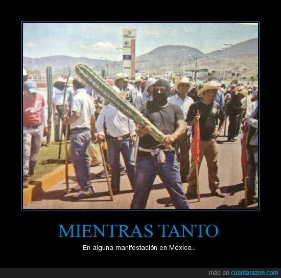 badass,cactus,manifestante,mexicano,periódico