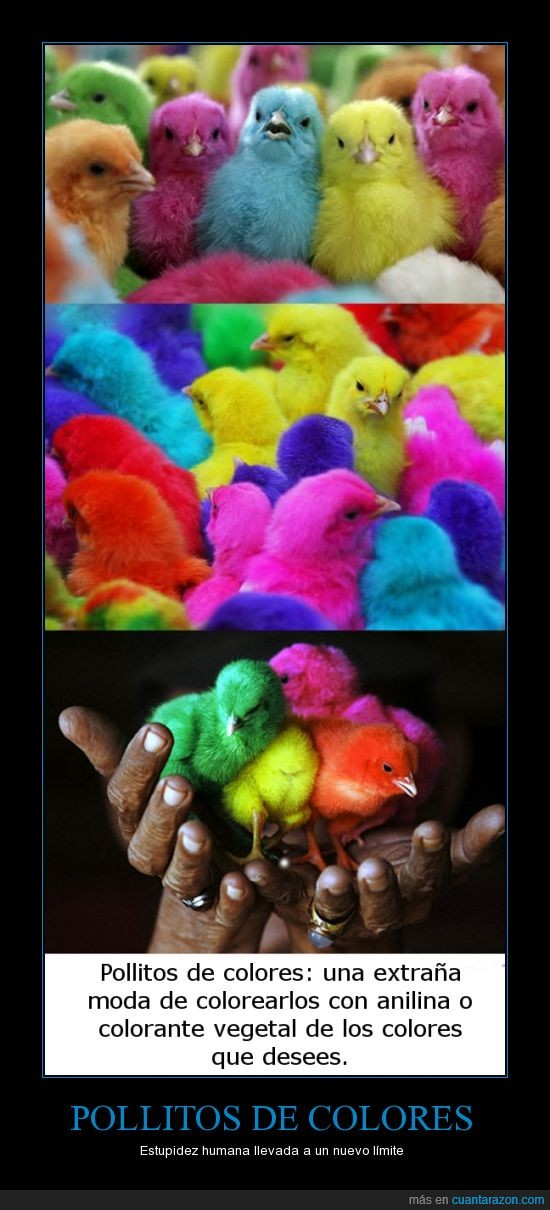 animales,azul,colores,estupidez,mascotas,pollitos,rojo
