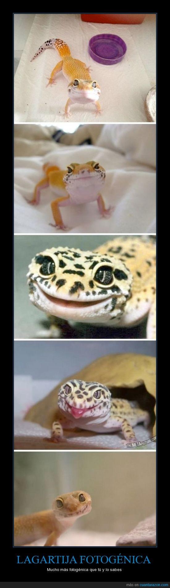 fotogénica,gecko,hipsters,sonrisa