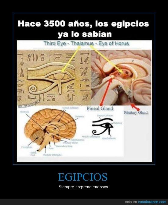cerebro,egipcio,egipto,horus,ojo