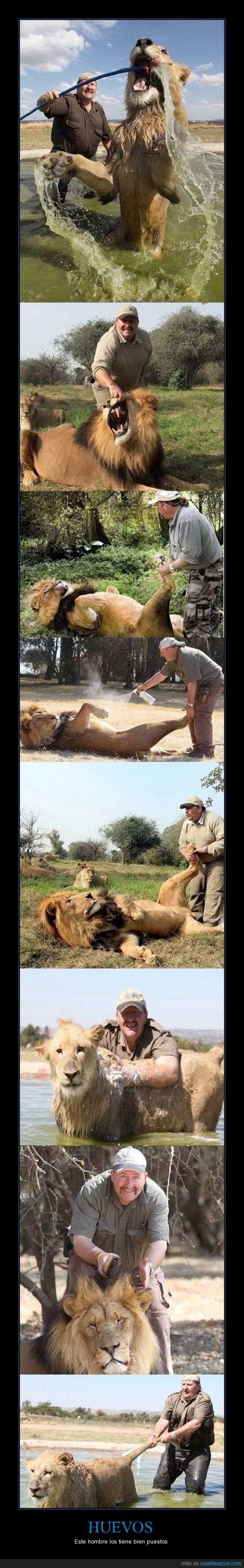 hombre,huevos,leones