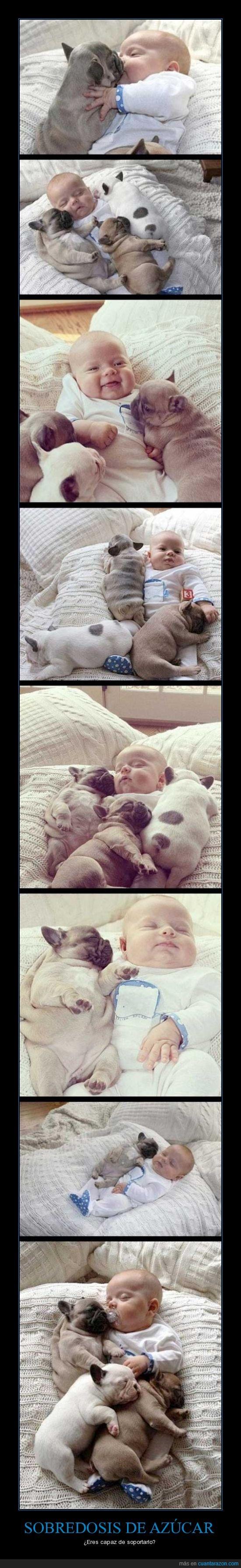 adorable,bebé,cachorro,cama,niño,perritos,ternura