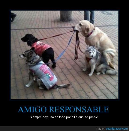 amigos,atar,correa,perros,responsable