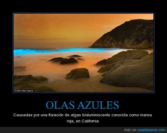Algas,Azules,Bioluminiscente,Bonito,California,Floración,Marea roja,No es photoshop,Olas
