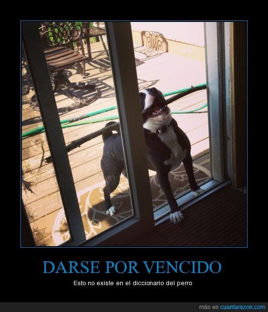 cruzar,palo,pasar,perro,puerta