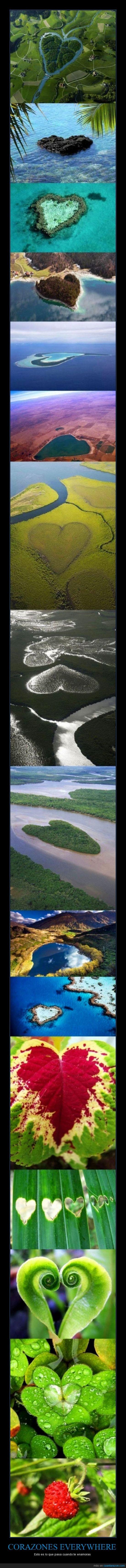 corazón,forma,islas,naturaleza,plantas