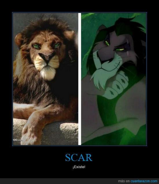 carne y hueso,leon,parecido,realidad,rey leon,scar