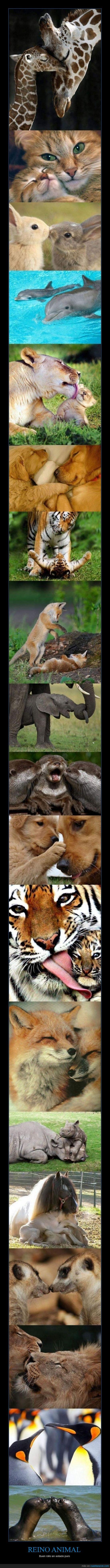 animales,besos,reino,ternura