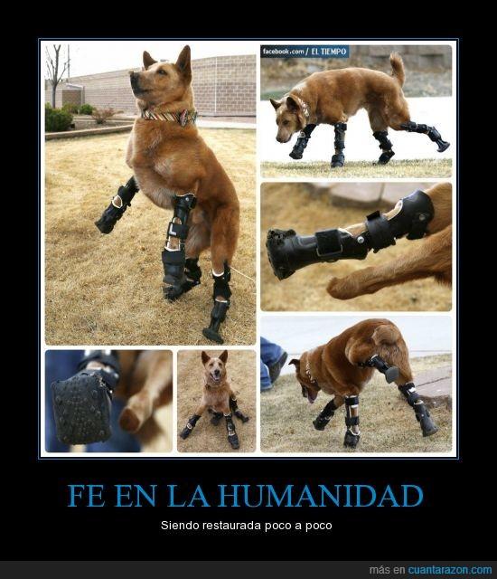 abandonado,perro,protesis