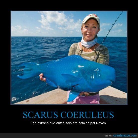 azul,Blue Parrot Fish,comer,pez loro,raro,reyes,scarus coeruleus