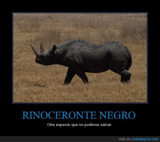 áfrica,extinción,extinto,fin,humanidad,naturaleza,planeta