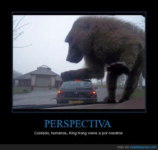 coche,king kong,macaco,mono,Perspectiva,zasca