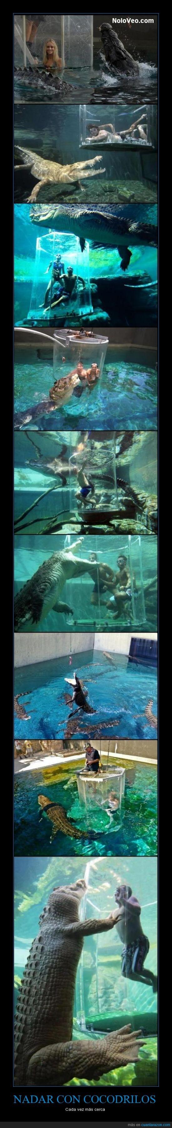 agua,bañarse,cocodrilos,grandes,nadar,tanque