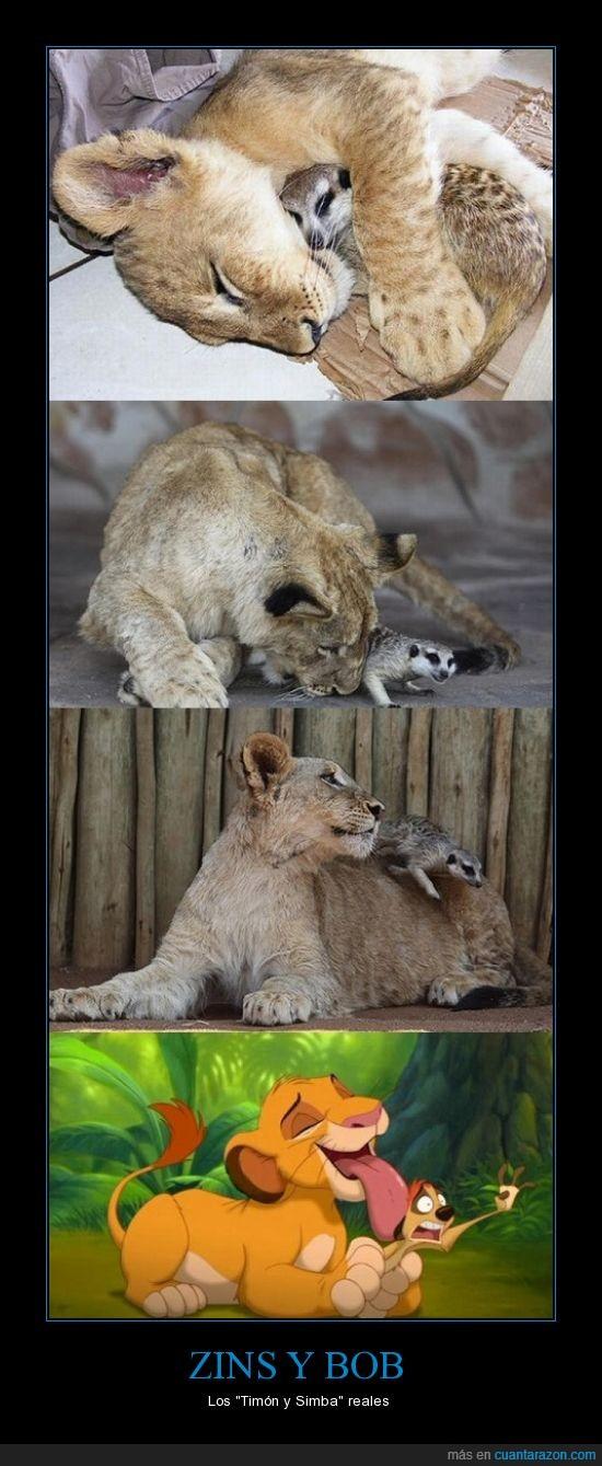 animales,disney,león,suricata,timón y pumba