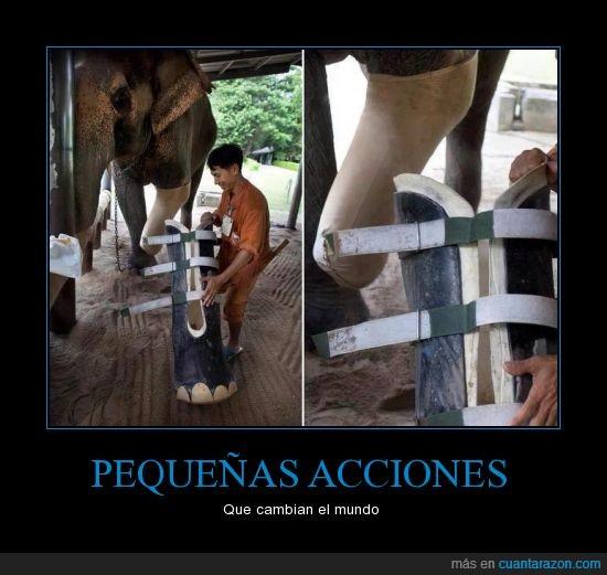 elefante,pata,pierna,prótesis,zoologico