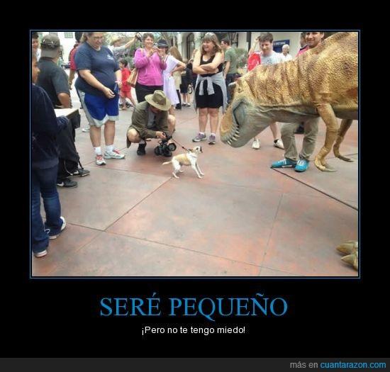 dinosaurio,ghnnh,gruñir,ladrar,los chihuahuas son muy así,perro