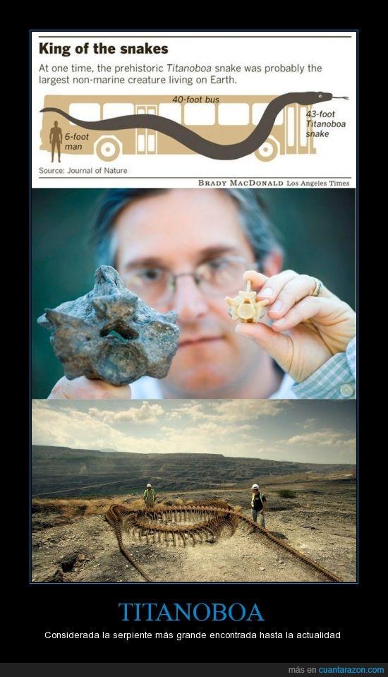 autobus,Fósiles,gigante,Serpiente,Titanica