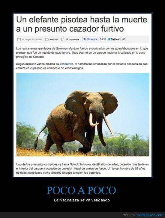 cazador,elefante,furtivo,karma wins!,naturaleza,pisa