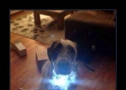 Enlace a IRON DOG