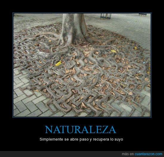 adoquin,calle,naturaleza,raíz,recuperar