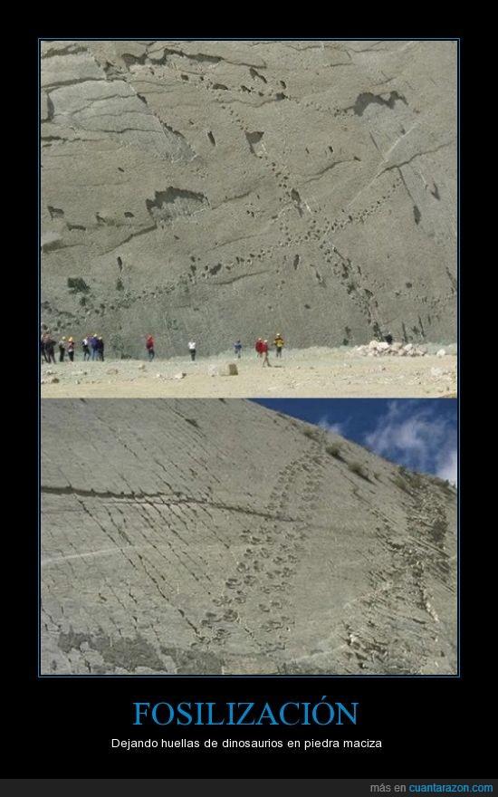 Bolivia,dinosaurios,fosilización,huellas,muro,pista de baile de los dinosaurios,placas