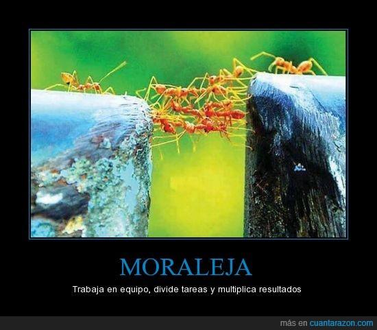 enseñanza,equipo,hormigas,profesoras