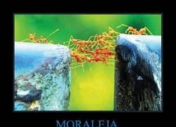 Enlace a MORALEJA