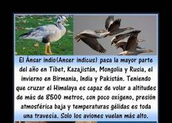 Enlace a AVES