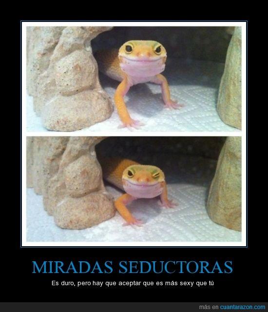 cueva,gecko,lagartija,miradas,seductora