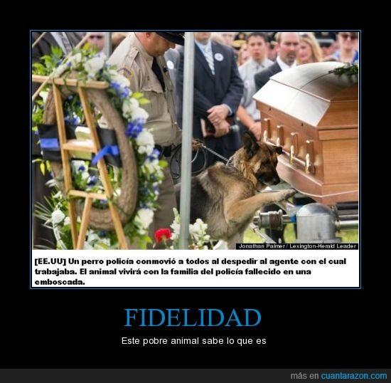 facebook,fidelidad,perro,policia