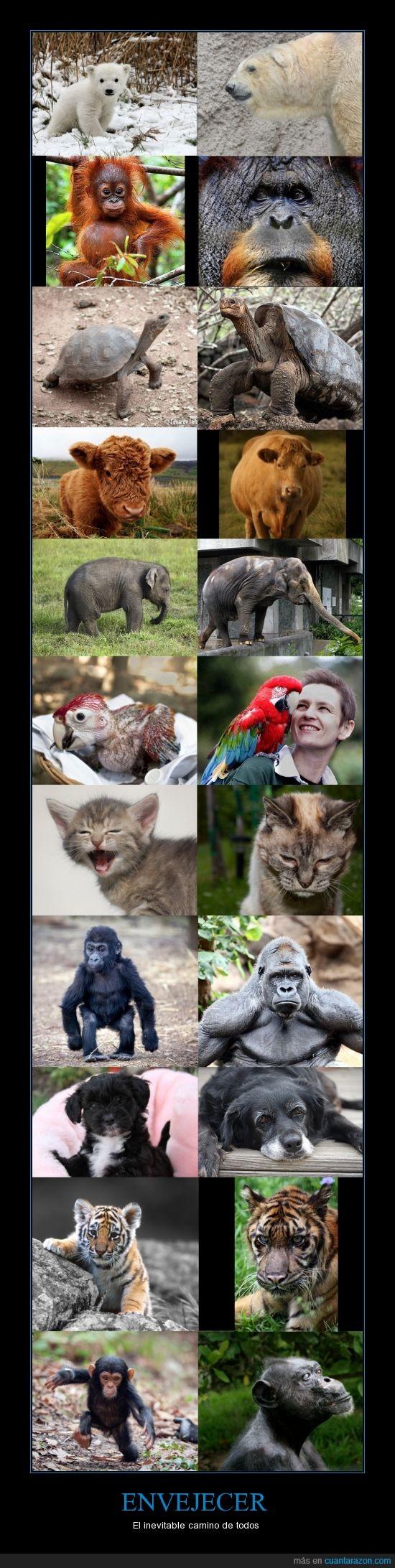 animal,Arturo,bebe,chimpance,cria,Elefante,galapagos,gato,George,gorilla,Gregorie,guacamaya,Guy,Hanako,Melani,orangutan,oso,Pancho,papagaya,perro,polar,Siam,tigre,Tortuga,Vaca
