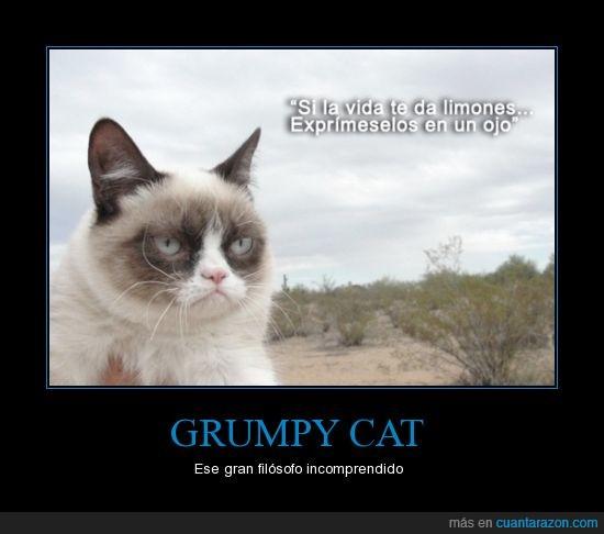 cat,exprimir,filosofia,grumpy,limones,ojo