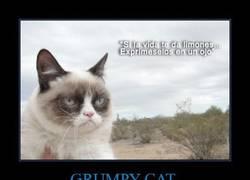 Enlace a GRUMPY CAT
