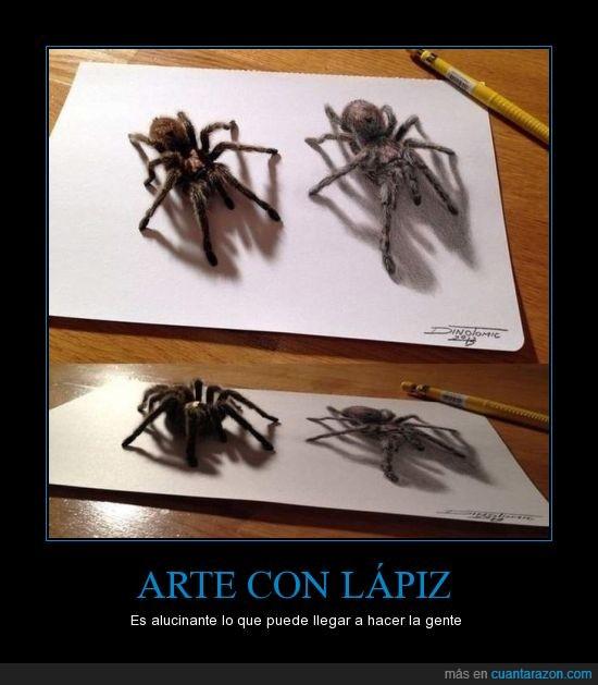 araña,arte,lapiz,sombra,tarantulas