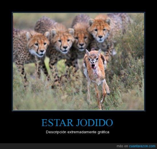 animal,comer,correr,detras,estar,gacela,guepardo,jodido,leopardo