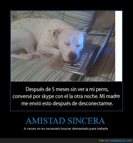 amistad,perros,sinceridad,skype