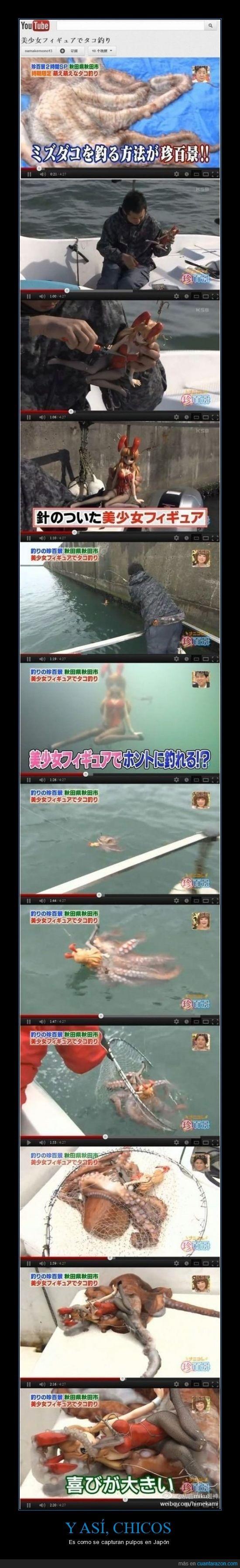 capturar,japon,mujer,pulpo,tentaculos