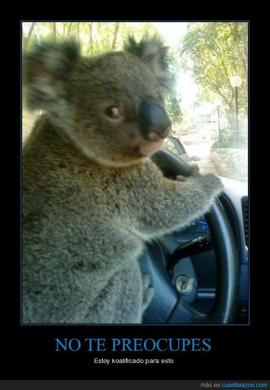 coche,conducir,koala,volante