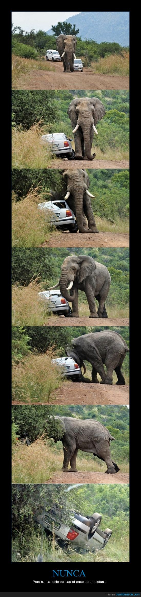 cabeza,coche,elefante,empujar,interrumpir,paso