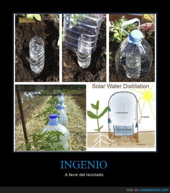 botellas,cultivo,invernadero,plastico,riego,vapor