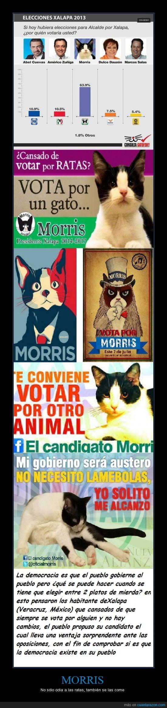 democracia,gato,morris,politica,votar