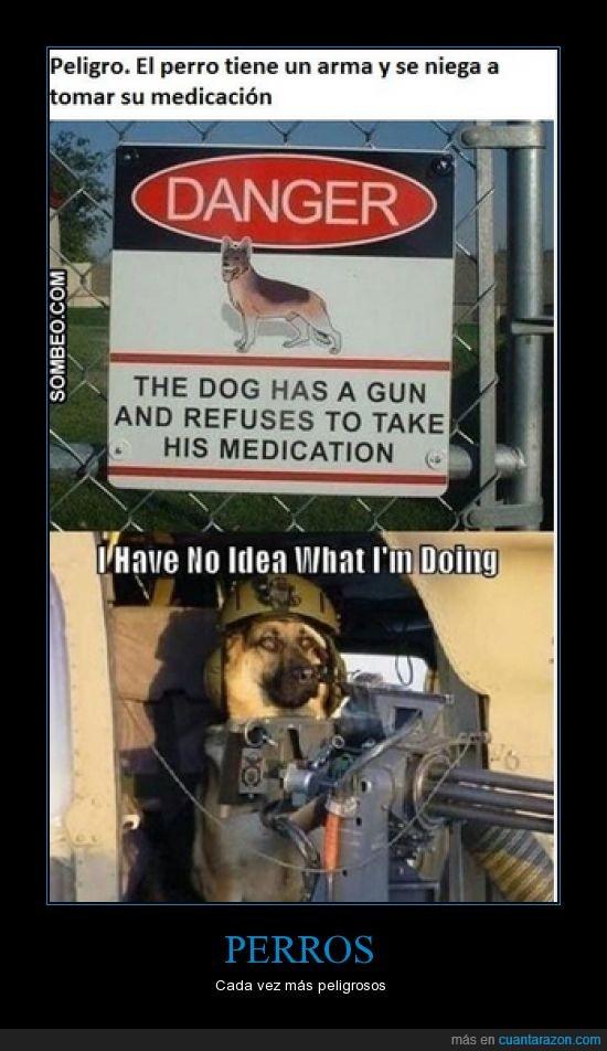 arma,i have no idea what i'mm doing,medicación,peligro,perro
